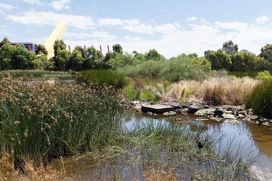 Utilização de Leitos de Macrófitas no tratamento de águas residuais